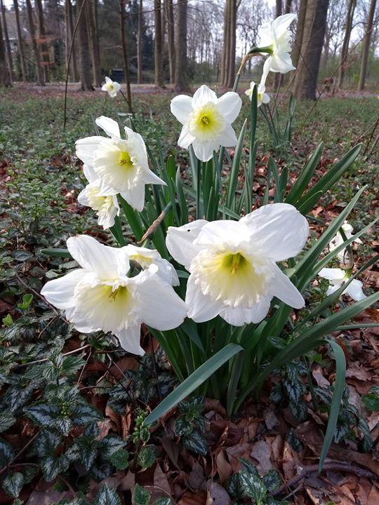 Geniet van de lente, ga de natuur in met je kind en pra...